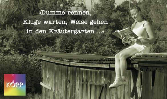4_dumme_rennen